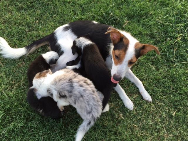 Mama Dog and Puppies